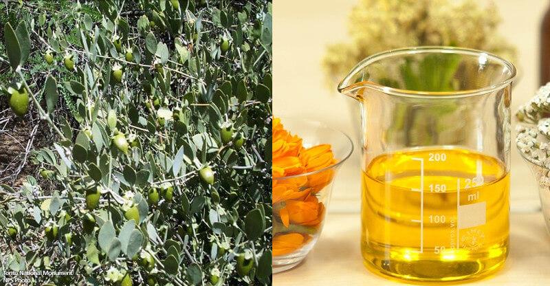 Aceite de jojoba ecológico