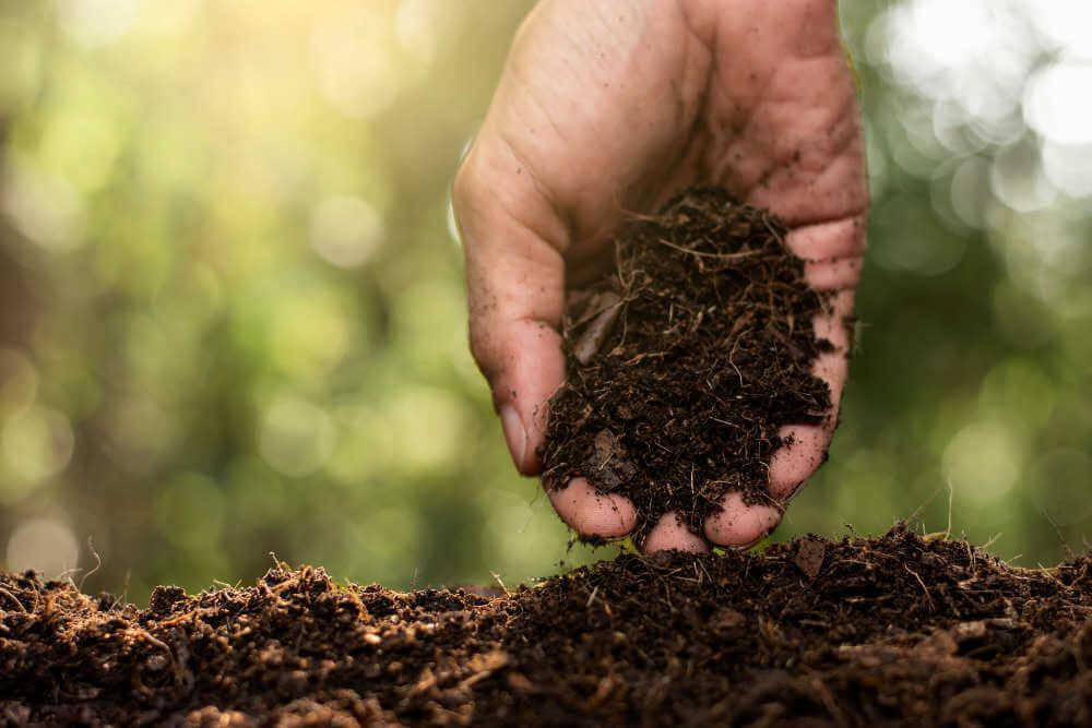 compost rico en humos suelto
