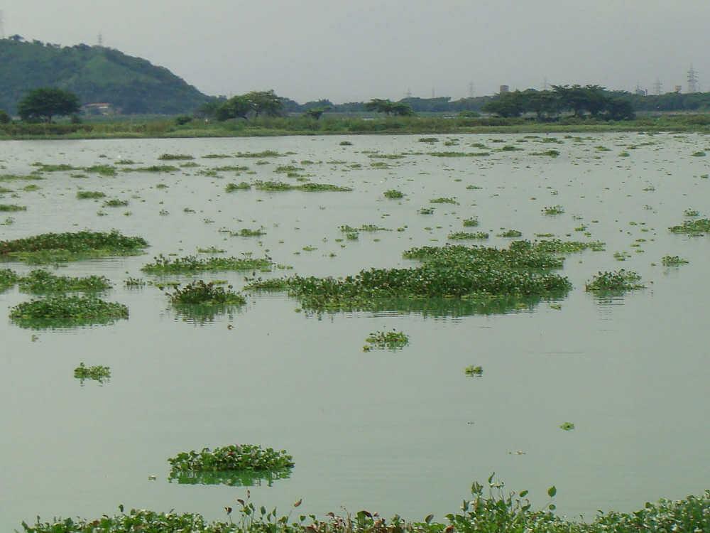 eutrofización de las aguas