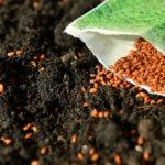 Sobre de semillas ecológicas