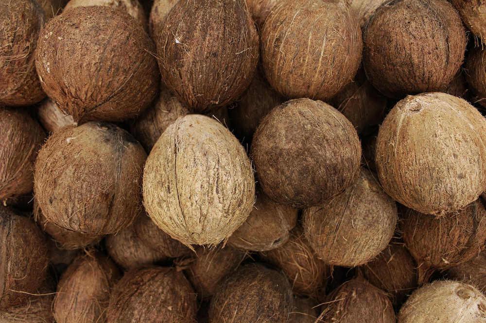 coco fruto del cocotero